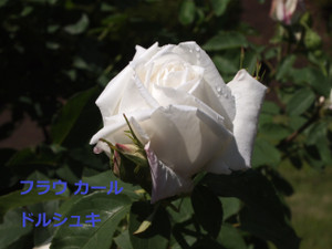 P5127326
